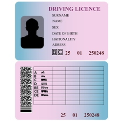 Driving license vector image vector image