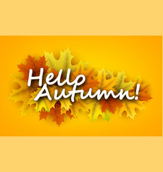 hello autumn background with maple leaves vector image