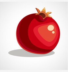 pomegranate vector image