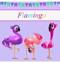 Three funny Flamingo on a pink background vector