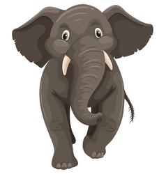 Wild elephant on white background vector