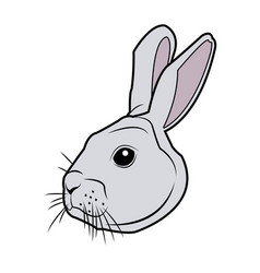 Wild rabbit head nature rodent farm image vector