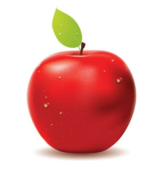 Fresh red apple vector image