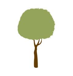 green tree leaf stem trunk image vector image vector image