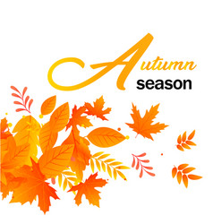 autumn season autumn leaves white background vector image