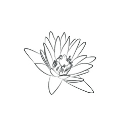 beautiful lily or lotous flower simple black lined vector image