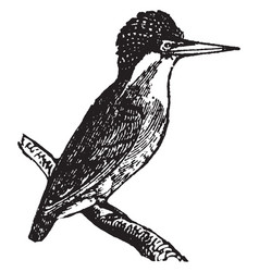 Crested kingfisher vintage vector