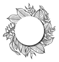 Graphic heliconia design vector