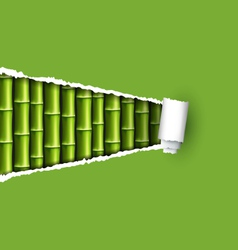 green bamboo grove with ripped paper frame vector image