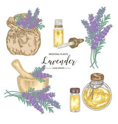 Lavender plant set lavender flowers mortar vector