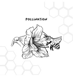 pollination process hand drawn sketch vector image