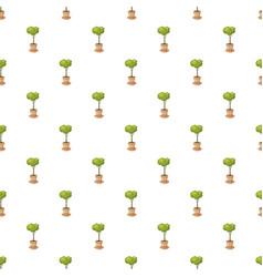 pot tree pattern vector image