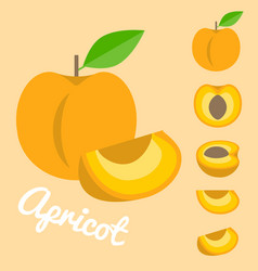 apricot vector image vector image