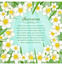 Floral background with white narcissus vector image