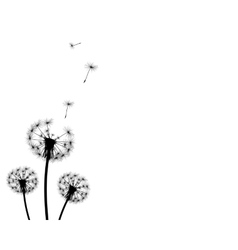 background dandelion faded silhouettes vector image