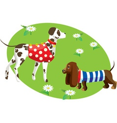 dogs in clothes vector image