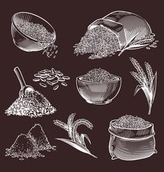 Hand drawn sketch rice vintage asian grains vector