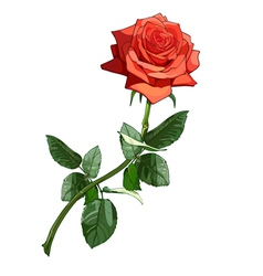 Rose red luxury vector