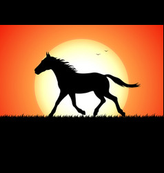 silhouette of a running horse on sunset background vector image