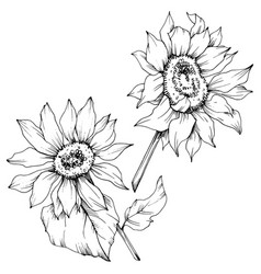 Sunflower Tattoo Outline Vector Images Over 180