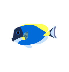 Acanthurus nigricans gold-rimmed tang vector
