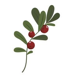 Flower poinsettia cartoon christmas flower vector