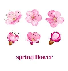 Sakura flowers vector image