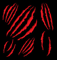 animal claws scratching tiger or bear paw vector image