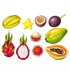 exotic tropical fruits set of asian vector image