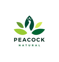 peacock leaf natural logo icon vector image