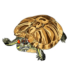 Turtle pond slider vector
