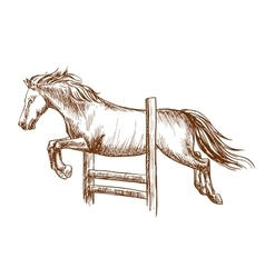 Wild horse jumping over barrier vector image vector image