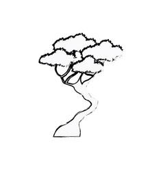 bonsay tree oriental season nature branch sketch vector image