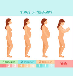 pregnant beautiful woman infographics vector image