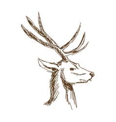 christmas deer head engraving style vintage vector image