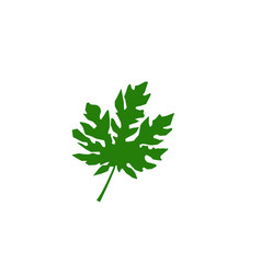 leaf floral patterns logo and symbols on a white vector image