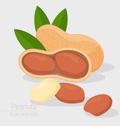 peanut icon vector image