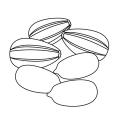 Sunflower seedsdifferent kinds of nuts single vector