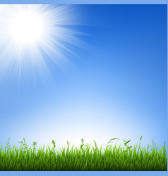 grass border with sky vector image