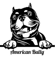 American bully peeking dog - head isolated vector