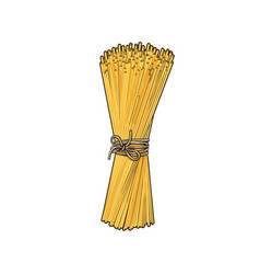 bunch of spaghetti tied with rope italian pasta vector image