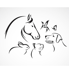 Group of pets - Horse dog cat bird butterfly rabbi vector