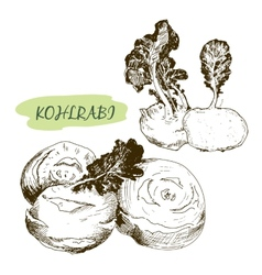 Kohlraby vector image