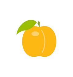 Orange peach vector