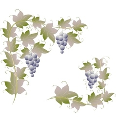 Pattern of vine grapes for page decoration EPS10 vector
