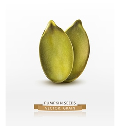 Pumpkin seeds peeled isolated on white background vector