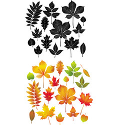 Set of autumn leaves collection vector