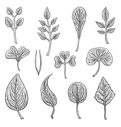 Types of leaf outline leaves of different types vector