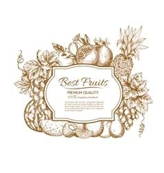 Best fruits sketch poster vector image vector image