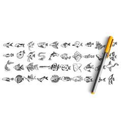fish doodle set vector image